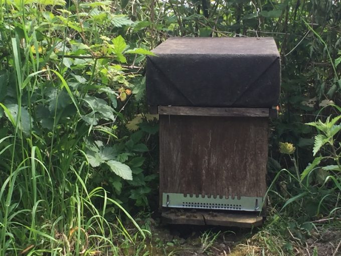 Une ruche heureuse