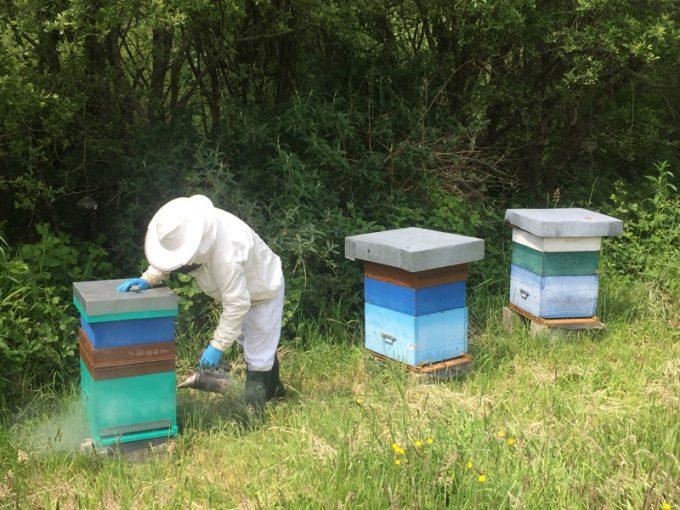 Jeau Paul Caradec auprès de ses abeilles