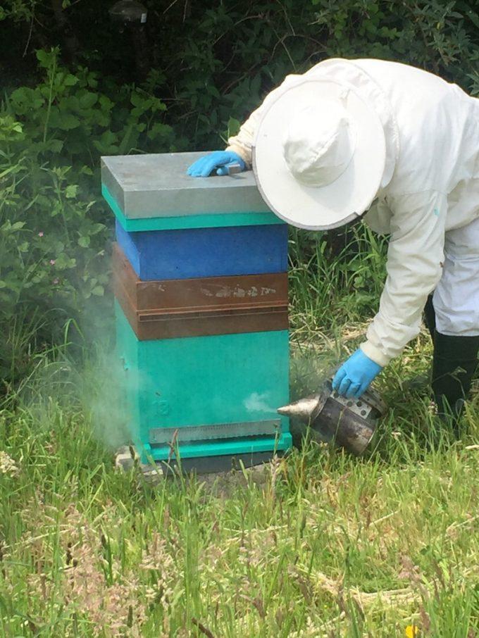 Jeau Paul Caradec auprès de ses ruches
