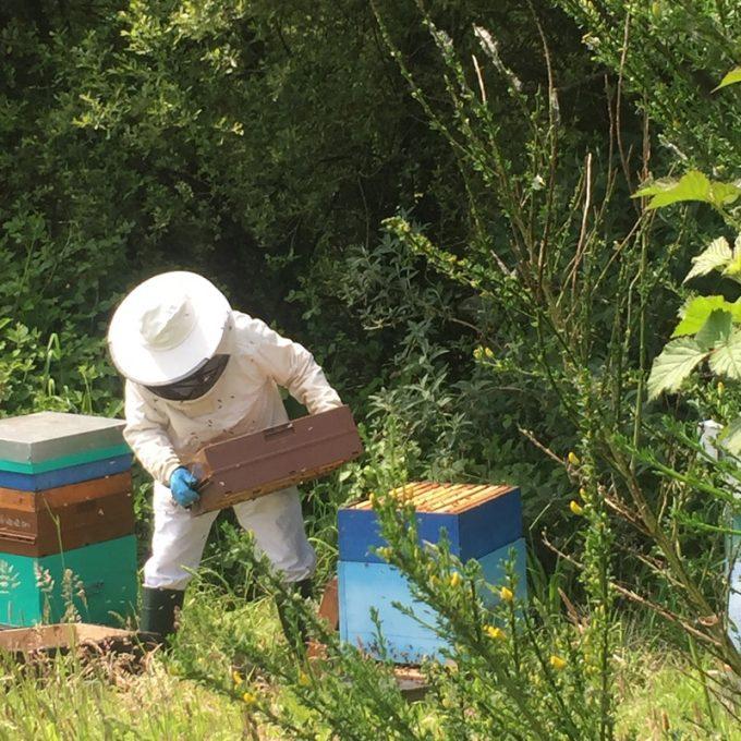 Un apiculteur et ses abeilles