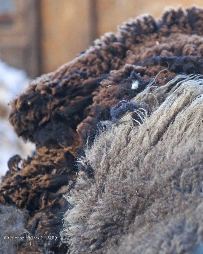 Peaux et laines de moutons et brebis