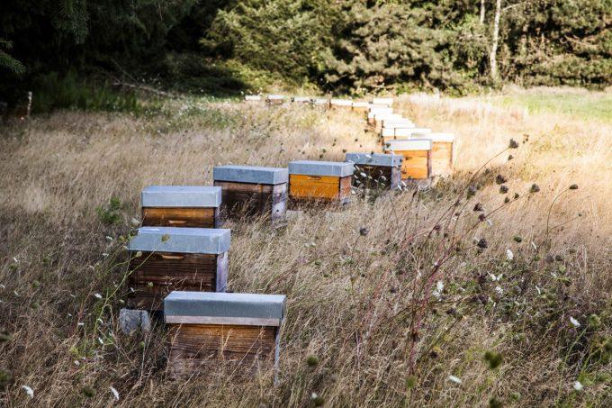 Les Ruchers Delamarche - ruches