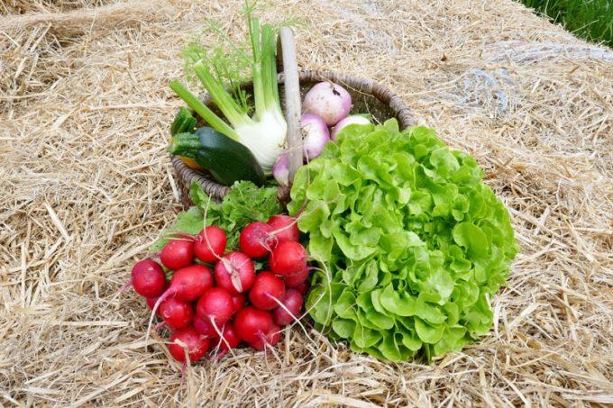 Légumes en vente directe