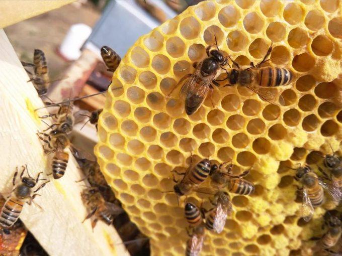 Les abeilles de Marneffe