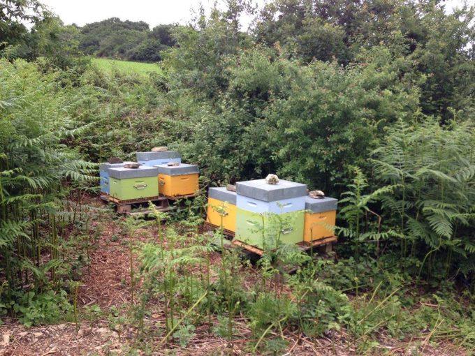 Les ruches et les abeilles