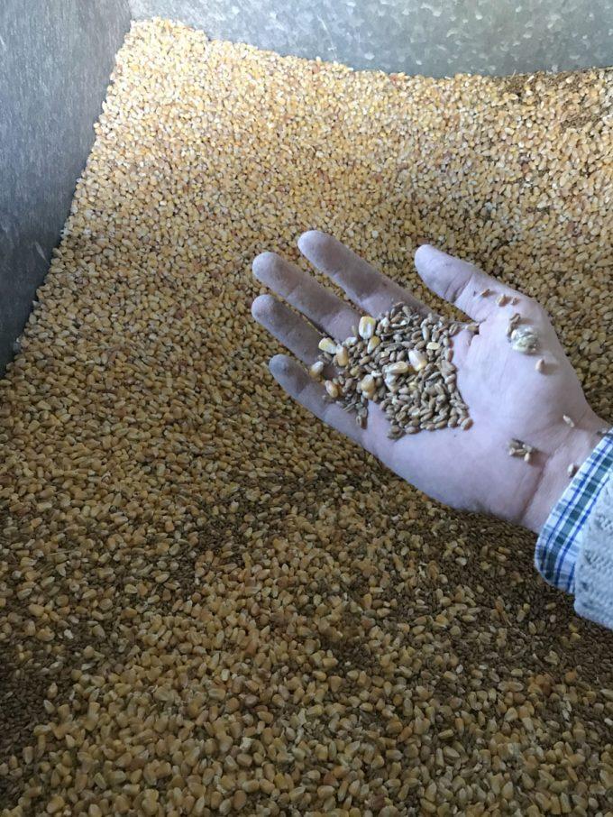 Céréales produites et stockées sur site