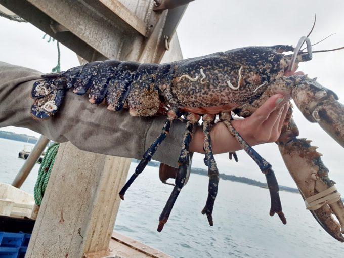 Armement Vafian - homard breton