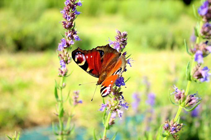 Papillon qui se gaaaave