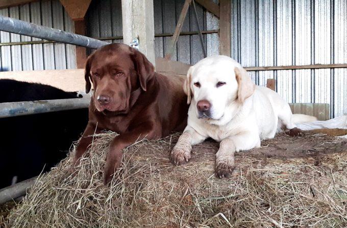 Élevage Ar Sav Heol - nos chiens de troupeau