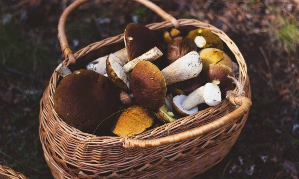 Cueillir des champignons en toute sécurité et tranquillité, grâce à cette formation