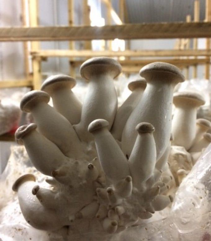 Les champignons poussent sans stress
