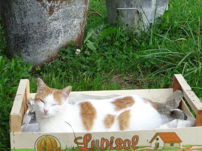 Les chats apprécient le calme... ;)