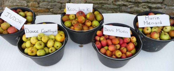 Quelques variétés de pomme