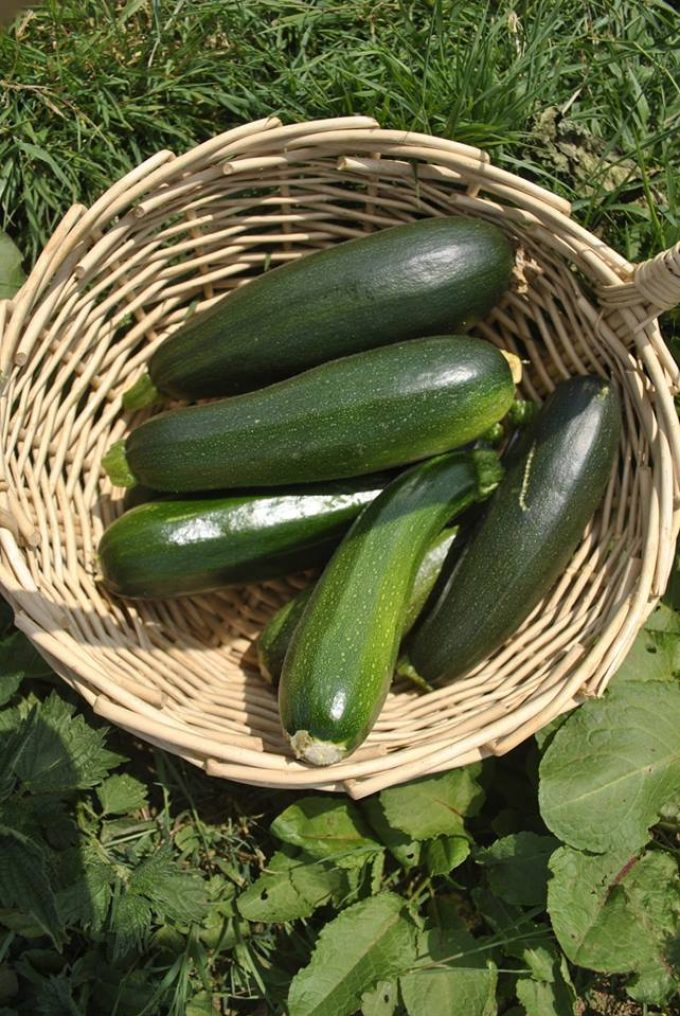 Courgettes locales !