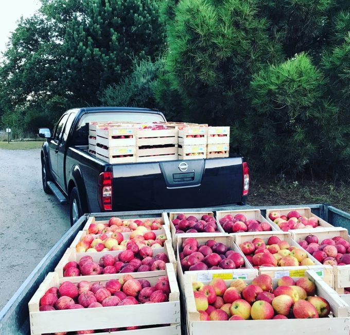 Domaine Lann Hallat - Caisses de Pommes