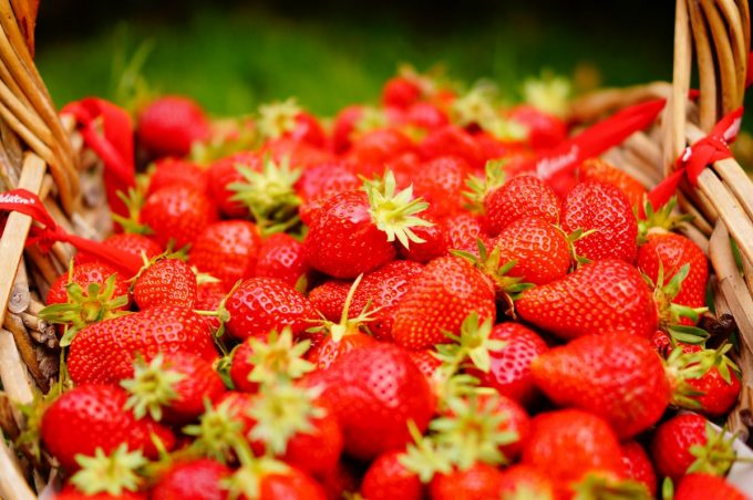 La Ferme Bio de Lintever - fraises