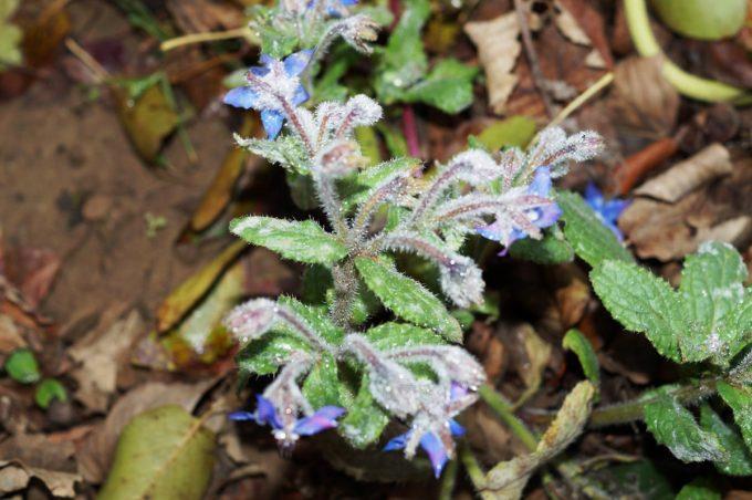 La Ferme Bio de Lintever - aromatiques