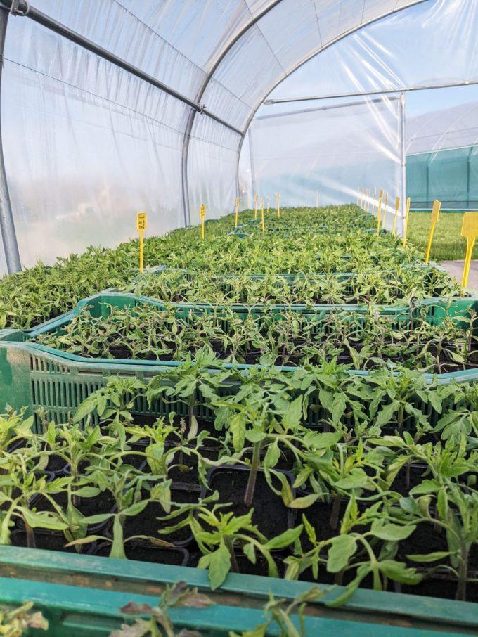 La Ferme du Buzuk - plants