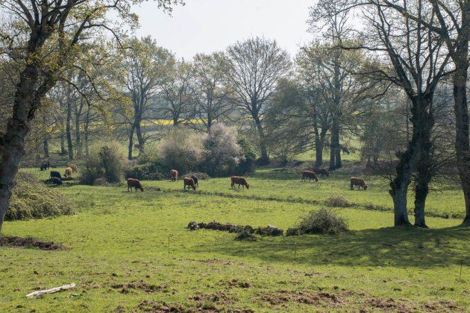 Elevage de plein air, nourris à l'herbe