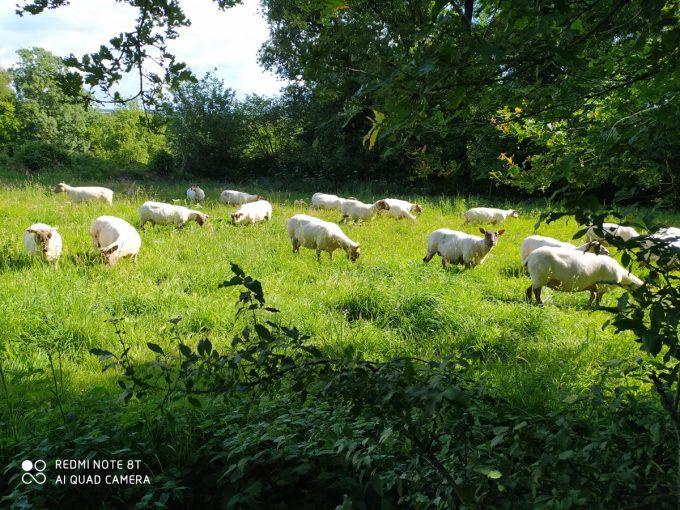 La Ferme de Coatleau - alimentation herbe et foin