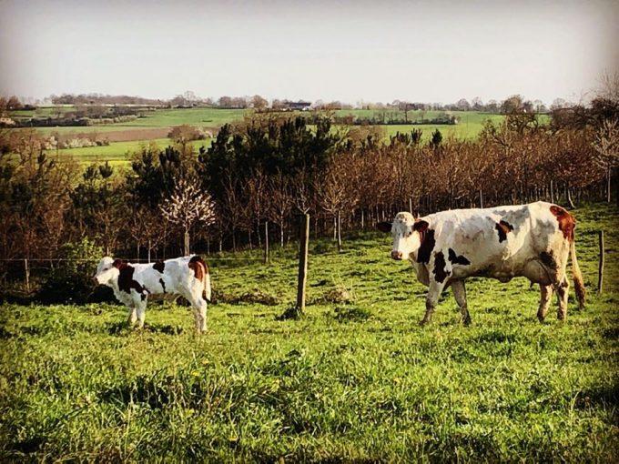 Ferme du Colombier - Nos Vaches au pré