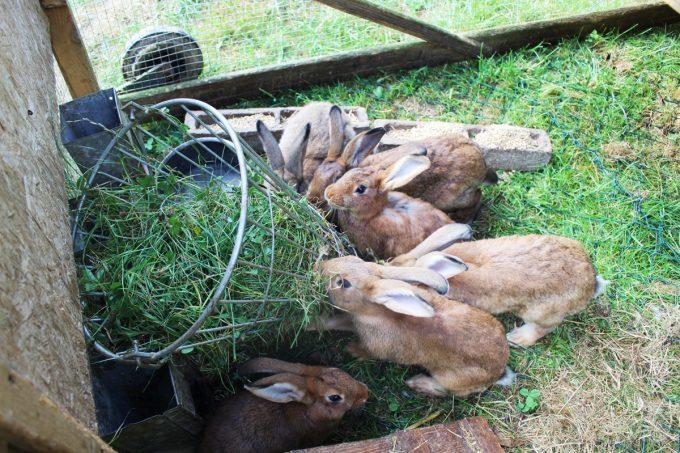 Lapins de la ferme du Favet