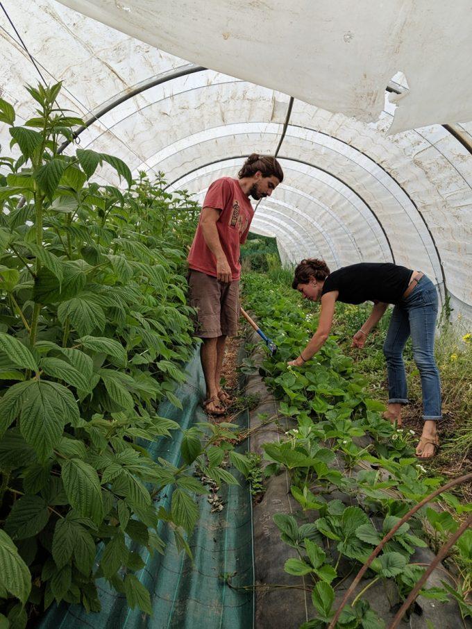 Récoltes de légumes
