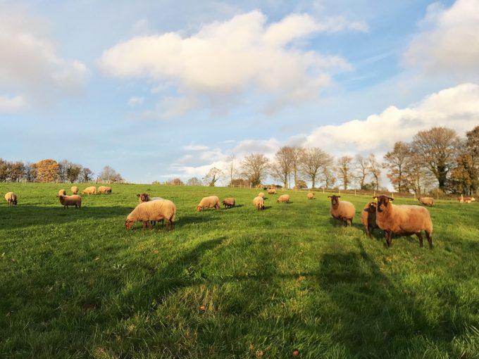 Ferme de Keringant - alimentation foin et herbe