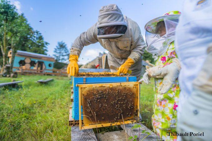 Les Miels de la Fontaine Airmeth - récolte du miel