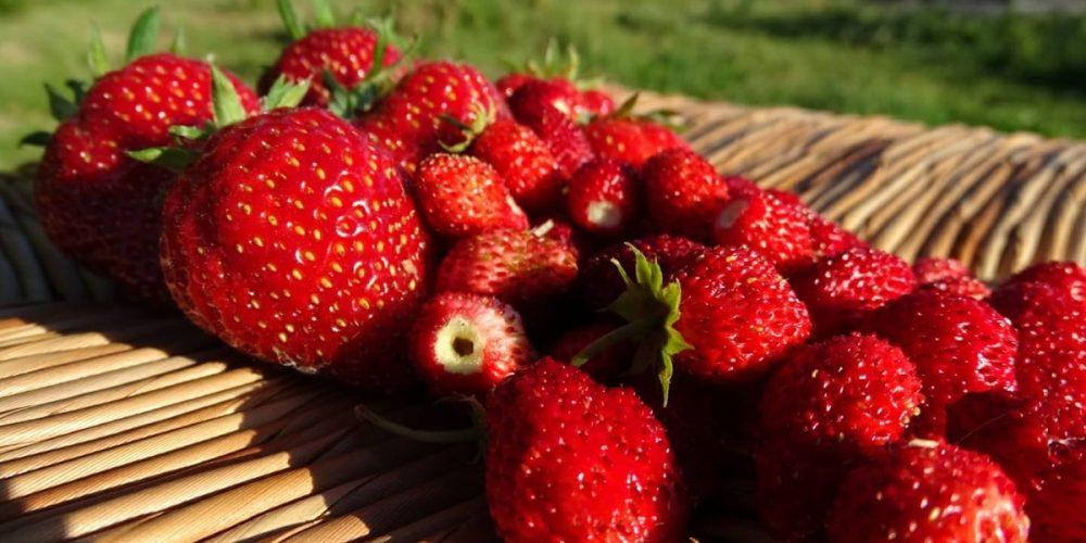 Guide des fruits de saison : le calendrier mois par mois