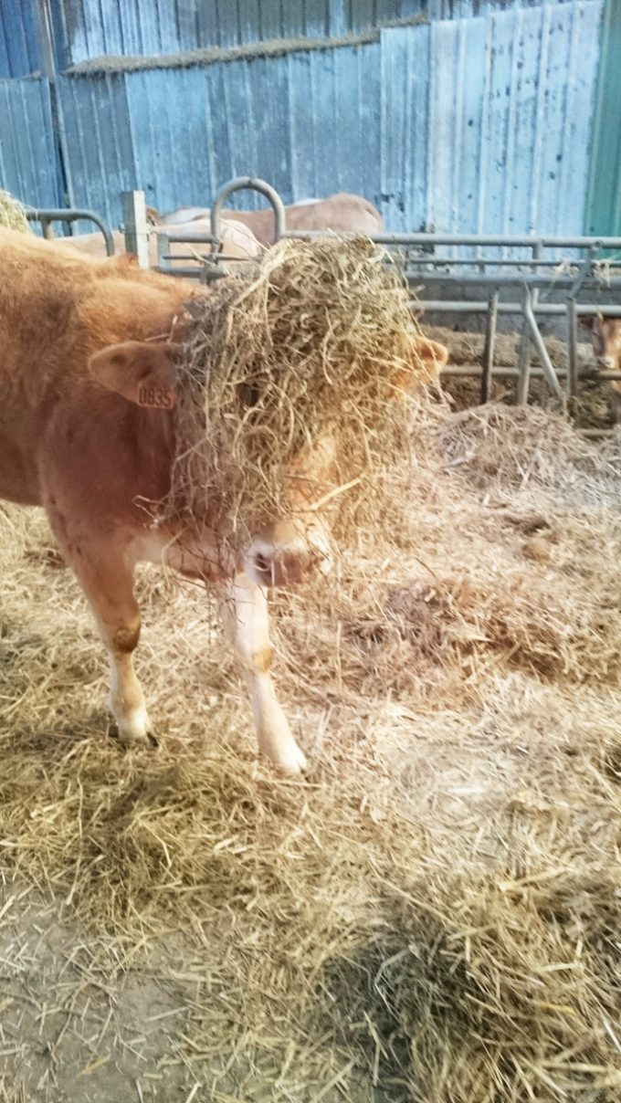 Happy Agri - Vache et paille