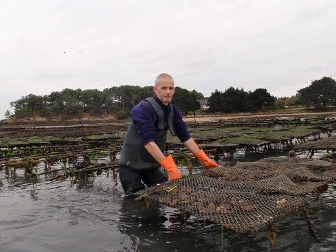 L'élevage des huîtres