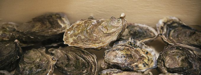 Des huîtres exceptionnelles à la saveur unique