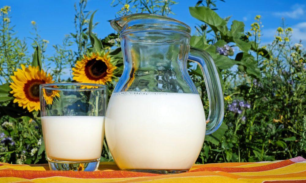 Quel est le lien entre l'alimentation des vaches et la composition du lait ?
