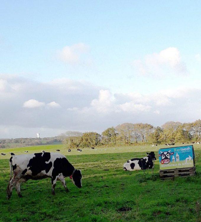 Vaches et Panneau