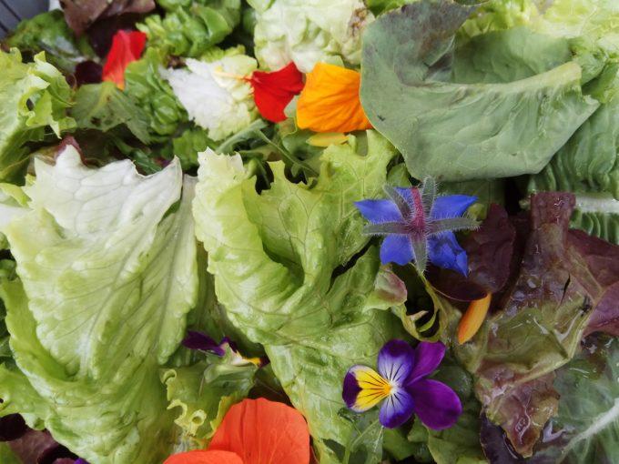Salades et fleurs à déguster