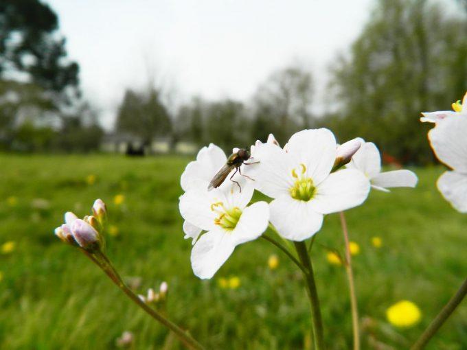 La Petite Ferme de Kerglerec - insecte et biodiversité