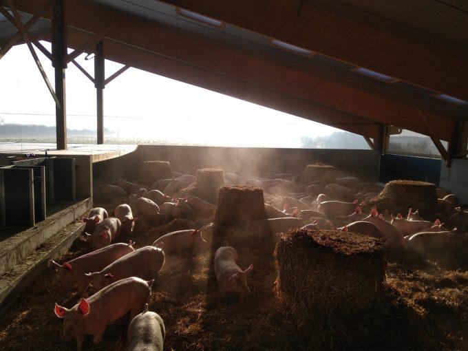 Le Cochon d'Où Don - porc bio