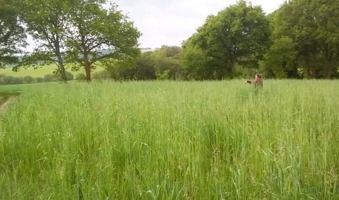 Angélique dans les champs