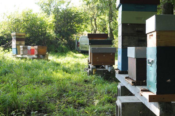 Les ruches de la Miellerie de la Vallée de l'Élorn