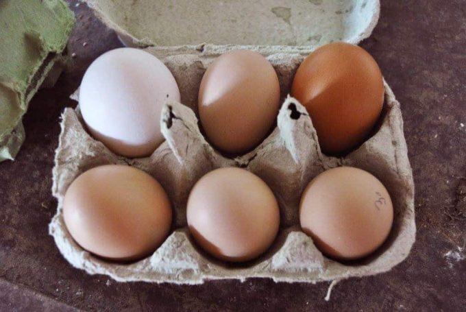 Des œufs 100% biologiques