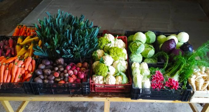 Paniers de légumes à volonté