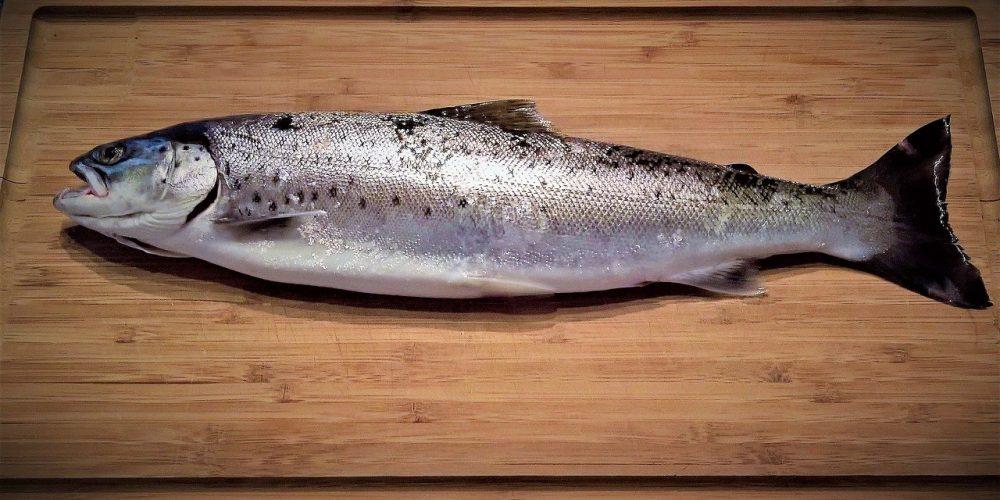 Truite ou saumon ? Le guide pour mieux choisir