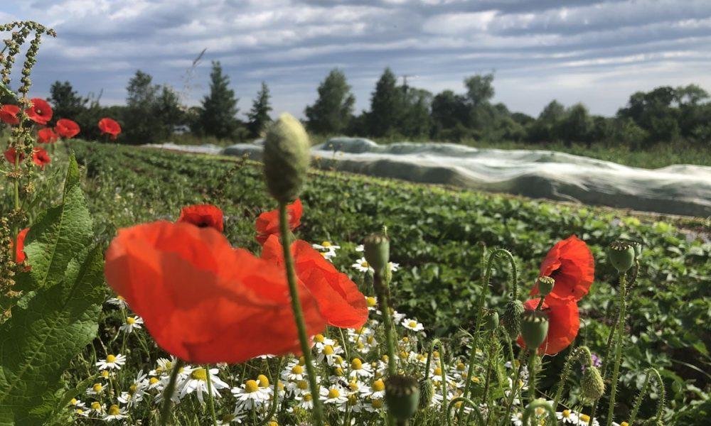 Portes-Ouvertes chez les producteurs : la bonne idée de l'été !