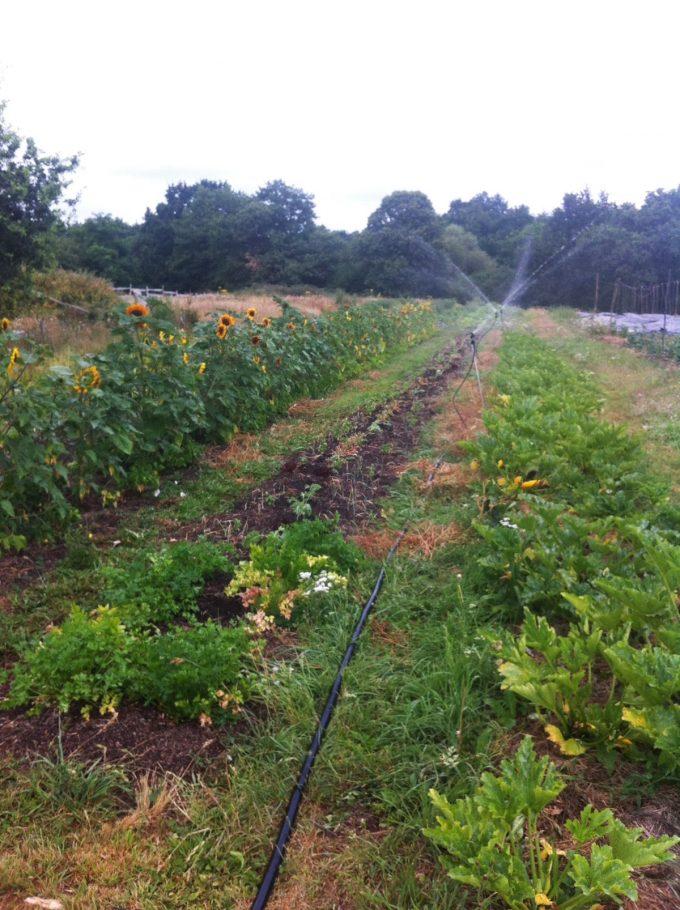 Maraîche en permaculture