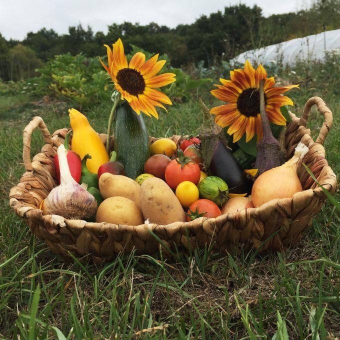 Panier de légumes de saison en permaculture