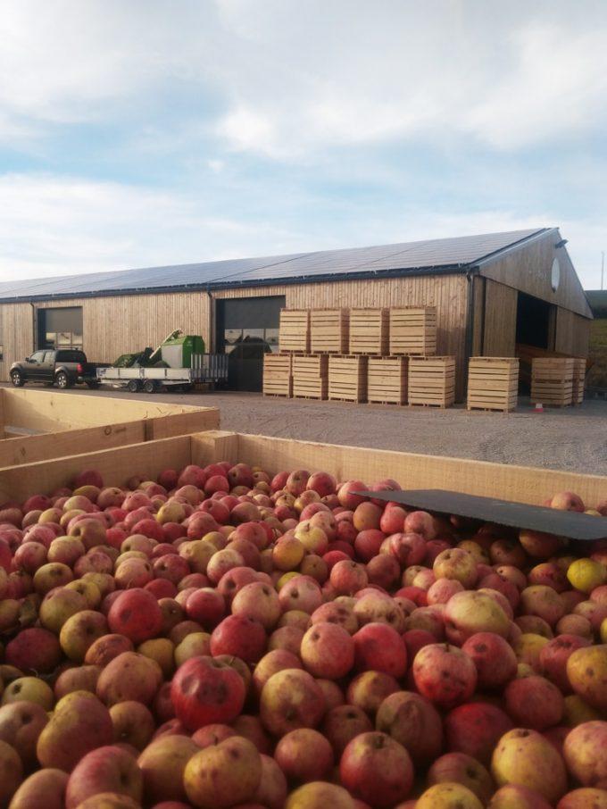 Stockage des pommes