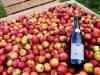 Cidre sur lit de pommes