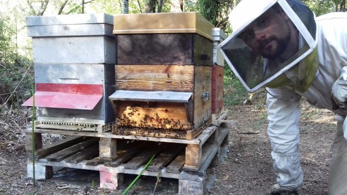Geoffroy, apiculteur