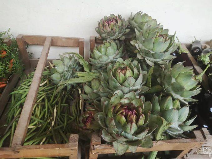Large variété de légumes en maraîchage, le fameux artichaut